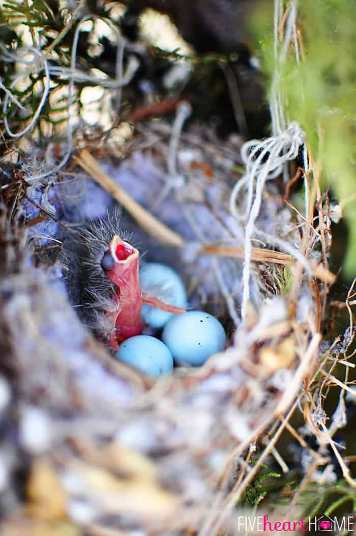 Nest with Newly Hatched Birdie