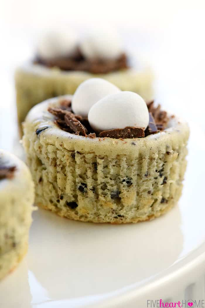 Bird S Nest Mini Oreo Cheesecakes Easter Dessert Recipe Simple Cheesecake Filling Is Studded With