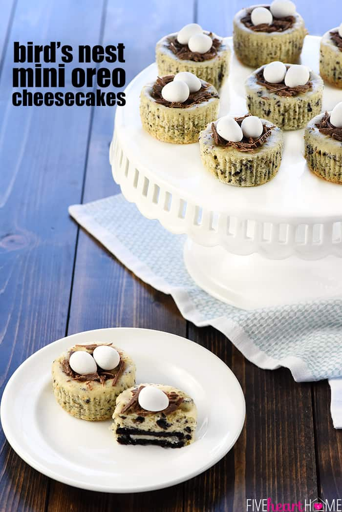 Mini Oreo Cheesecakes decorated like bird's nests