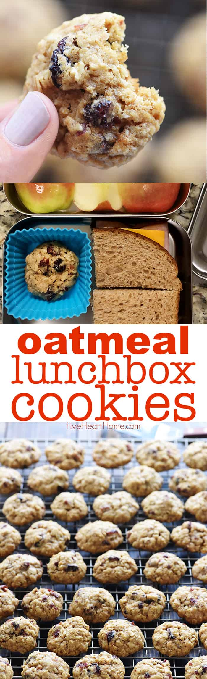 Oatmeal Lunchbox Cookies ~ small, wholesome treats perfect for tucking into a lunchbox to brighten your favorite child's day! | FiveHeartHome.com via @fivehearthome